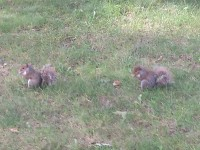 Nazareth Wild Kingdom: Squirrels Gone Wild