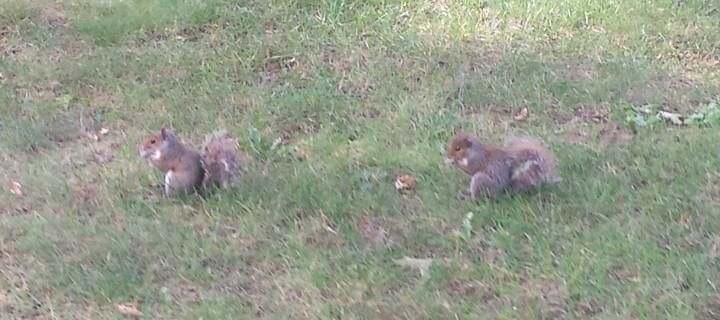 Nazareth Wild Kingdom: Squirrels Gone Wild