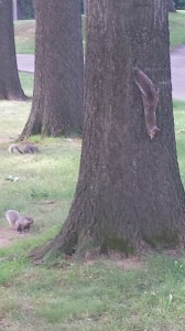 Squirrels inspecting tree and grass