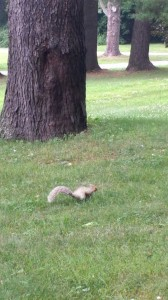 Albinie Squirrelie