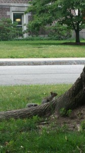 Squirrel inspecting tree